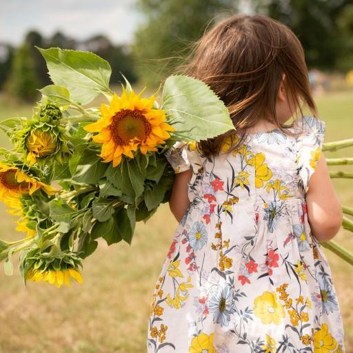 Sunflower picking at Dart's Farm