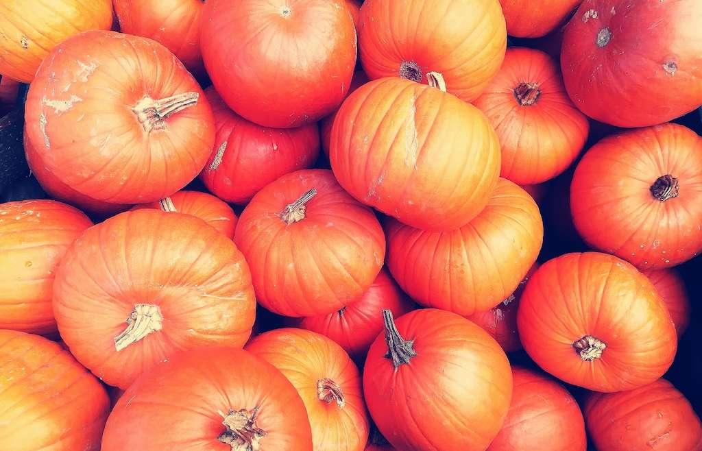 Top Pumpkin Picking Patches in Devon 2019
