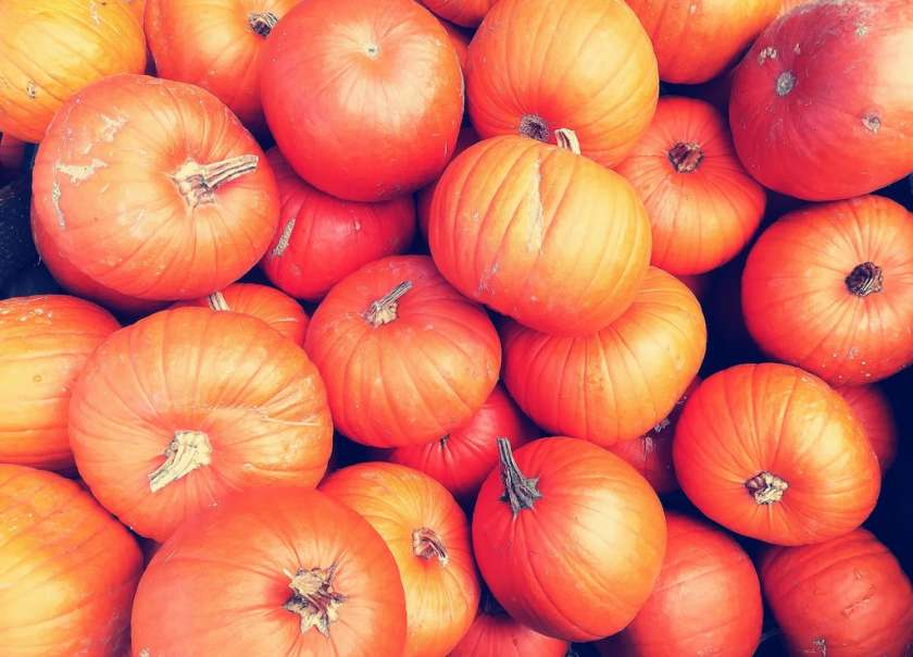 Top Pumpkin Picking Patches in Devon 2019