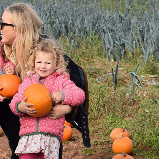 Pumpkin picking patches in Devon 2020