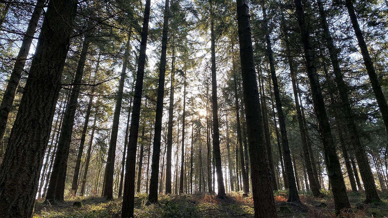 Huxham Brake Woods Walk, East Devon