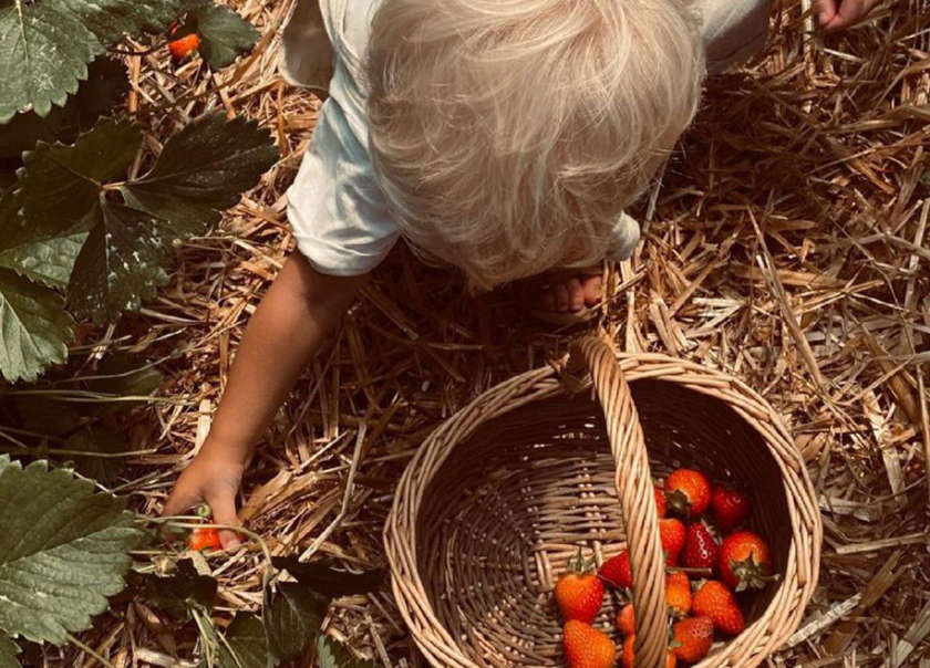Strawberry pick your own in Devon 2021