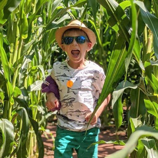 Maize Maze fun in Devon 2021
